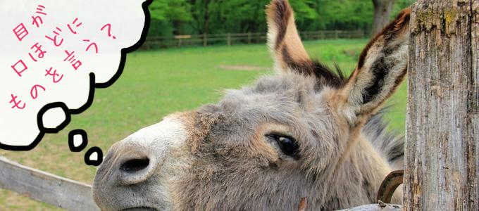 「目は口ほどにものを言う」証拠は動物の目を見ればわかった!話